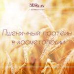 Протеины пшеницы в косметике