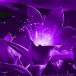 Фиолетовые мешки под глазами