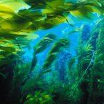 Косметика с морскими водорослями